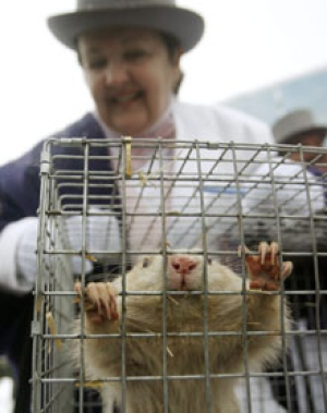 Wiarton Willie, CBC Photo - Nathan Denette/CP