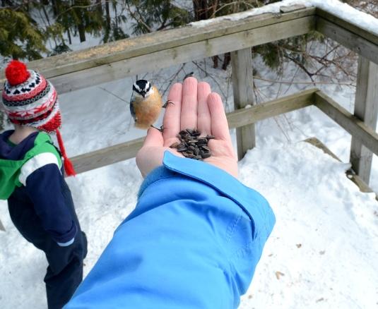 BirdFeeding2(NUTHATCH)